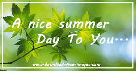 A nice summer day to You... Everyday Greeting card. Maple Leaves. Green background. A sunny day. Free Download 2021 greeting card