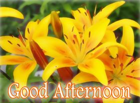 Good Afternoon! Yellow flowers. Yellow lilies. Good Afternoon... summer... Ecards for friends... Free Download 2021 greeting card