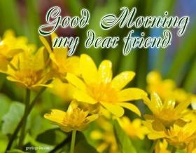 Good morning, my dear friend! Yellow flowers. Yellow flowers for my friend. A sunny day. Photo. Free Download 2021 greeting card