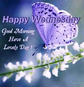 Good Morning and Happy Wednesday. New ecard. Good Morning. Purple Butterfly. Wishes. Wednesday. Have a lovely day. White flowers. Free Download 2021 greeting card