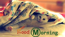 Good Morning from a white cat. New ecard for free. Good Morning. A white Cat. Blanket. Free Download 2021 greeting card