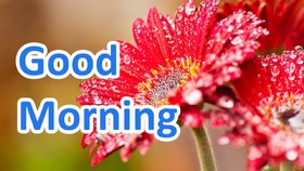 Colorful and fresh e-card for a girl. New ecard. Good Morning. Red Flowers with dew. Free Download 2021 greeting card