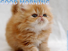 Good morning! Soft kitty, loving kitty. Cute cat. Free Download 2021 greeting card