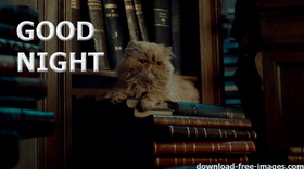 Good Night! PNG. A cat of learning. A cat. Books. Cat in the library. This kind, intelligent cat. Free Download 2021 greeting card