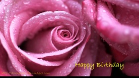 A beautiful big pink rose for happy birthday. Happy Birthday. Pink big Flower. Rose. New ecard for free. Free Download 2021 greeting card
