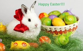 Happy Easter from a furry bunny. New ecard. Happy Easter. White Easter Bunny. White Easter Rabbit. Easter 2018. Easter Eggs are in the basket. Free Download 2019 greeting card