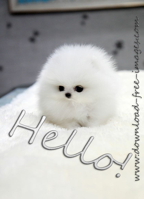 Hello! A little hairball :) White dog. Puppy. White fur, black eyes, and bloody adorable. Free Download 2021 greeting card