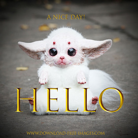 Hello! A nice day! Gold text. Everyday Greeting Cards. I'm your gentle and helpless monster) White fur, hazel eyes, and bloody adorable. Gremlins. Free Download 2021 greeting card