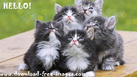 Hello! Cute kittens. A super cats. A Fluffy black and white cats. Green background. Free Download 2021 greeting card