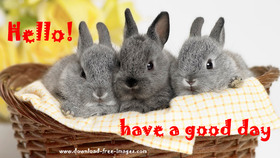 Hello! Have a good day! Bunnies in a basket. Grey Rabbits. Cute Rabbits. Free Download 2021 greeting card