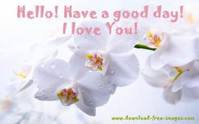 Hello! Have a good day! I love You! White flowers for You. Warm wishes. Nice ecard. Free Download 2021 greeting card