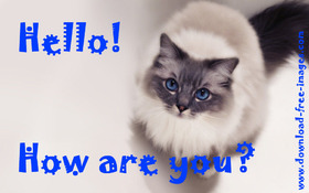 Hello! How are You? A beautiful cat. JPG. Blonde cat with blue eyes. Free Download 2021 greeting card