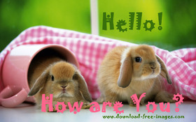 Hello! How are You? Cute little bunnies. JPG. Little fluffy bunnies. Blond color. Burlywood color. Free Download 2021 greeting card