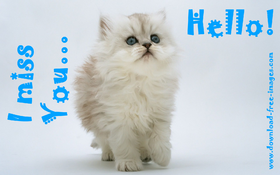 Hello! I miss You... A cute cat. PNG. Blonde cat with blue eyes. Free Download 2021 greeting card