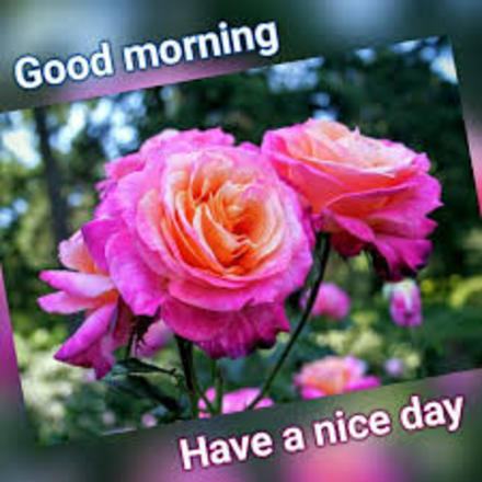 Good Morning Have A Nice Day New Ecard For Free The Best Greeting Card For You