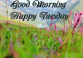 Happy Tuesday and beautiful nature. New ecard. Tuesday morning. Beautiful view and nature. Pink Tuesday flowers. Have a happy Tuesday and Good Morning. Tuesday wishes. Free Download 2019 greeting card