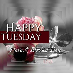 Happy Tuesday. Have a blessed day. Ecard for you. Tuesday. Happy tuesday. I wish you energy and success for a whole day. Have a blessed day. Pink rose for tuesday. Free Download 2019 greeting card