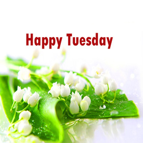 Tuesday lily of the valley. New ecard. Happy Tuesday. White flowers. Lily of the valley on Tuesday. Have a nice Tuesday, have a great day. Tuesday postcard. Free Download 2019 greeting card