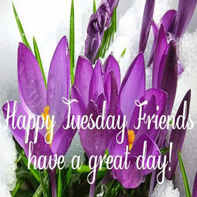 Happy Tuesday friend. New ecard. Happy Tuesday friends. Have a great day. Happy Tuesday. Violet flowers. Free Download 2019 greeting card