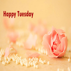 Rose Tuesday. New ecard. Happy Tuesday. Soft flower. White pearl. Rose. Pretty Tuesday card for her. Have a nice day. Tuesday. Free Download 2019 greeting card
